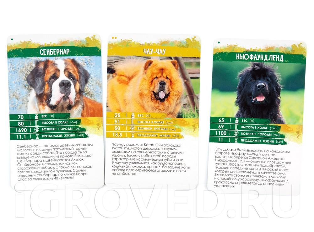 Карточки настольной игры Секреты Планеты: Собаки