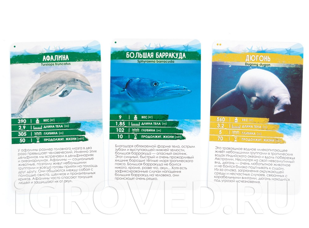 Карточки настольной игры Секреты Планеты: Морские обитатели