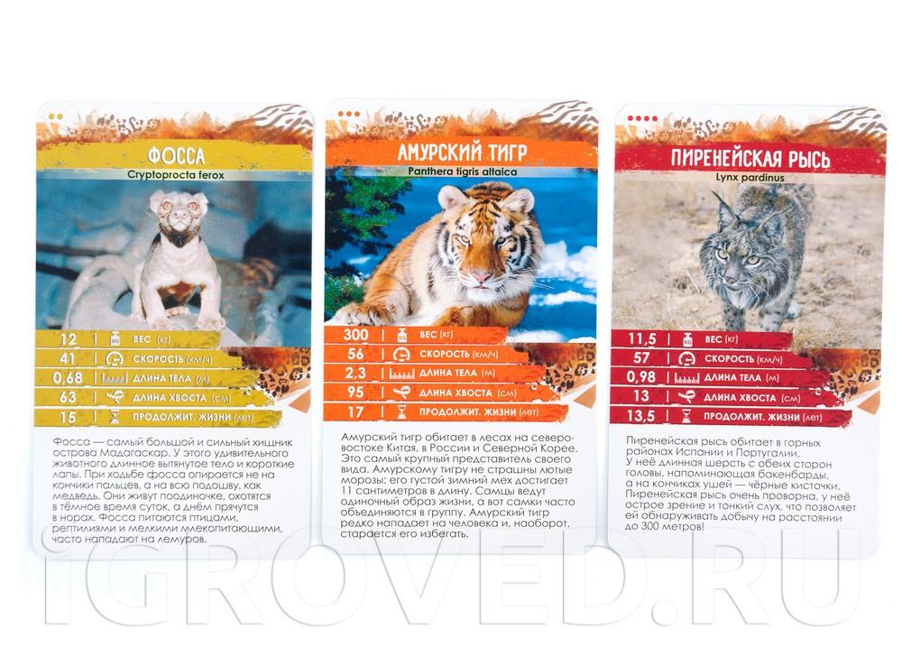 Карточки настольной игры Секреты Планеты: Хищники