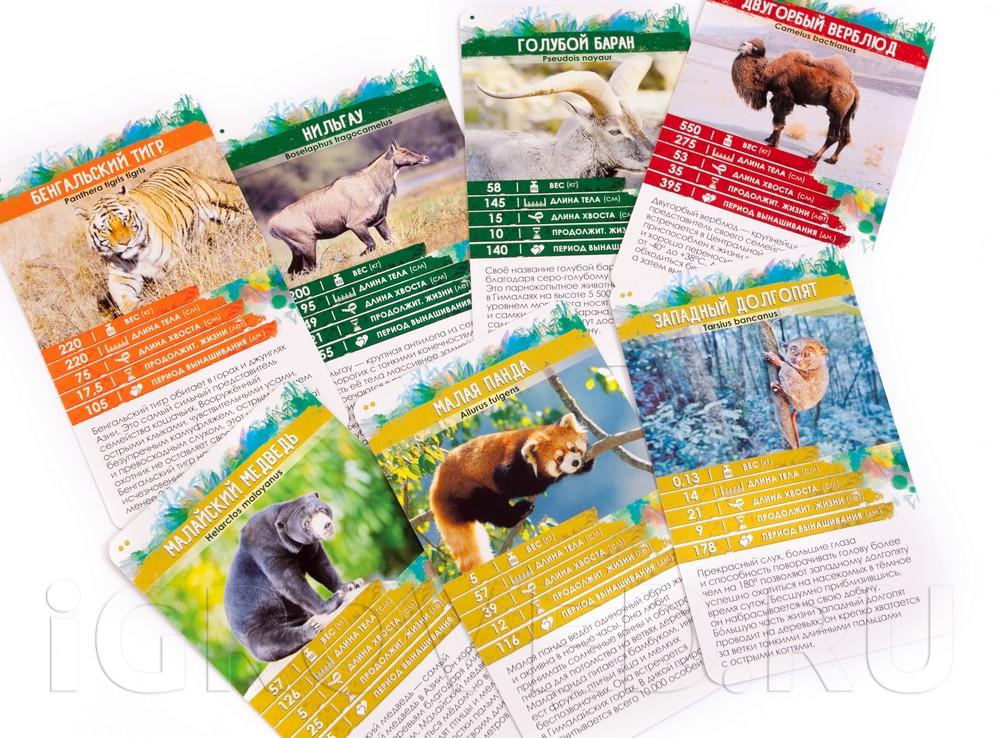 Карточки настольной игры Секреты Планеты: Животные Азии