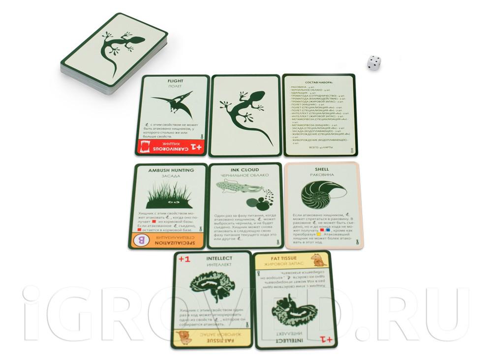 Компоненты настольной игры Эволюция. Время летать (дополнение)